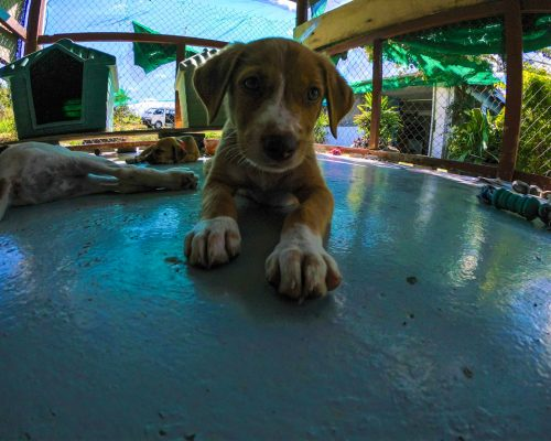 cute dog at Fiji animal shelter