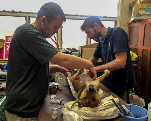 Vets at Fiji animal shelter