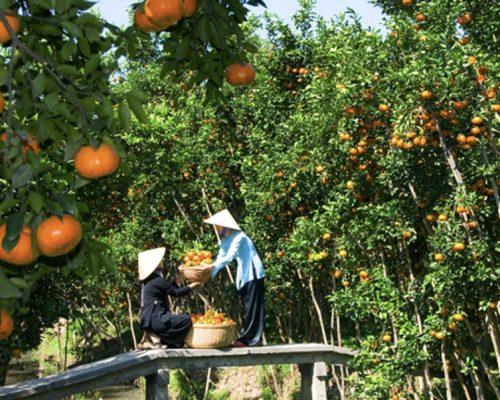Fruit garden