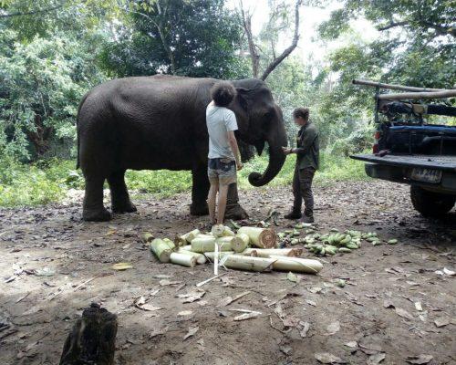 feeding elephant