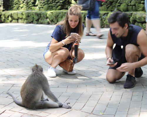 taking photo of monkey