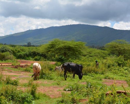 Local farm in kenya organic farming placement for volunteers