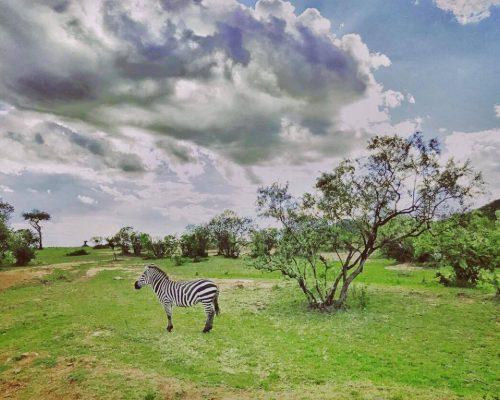 _Maasai Mara