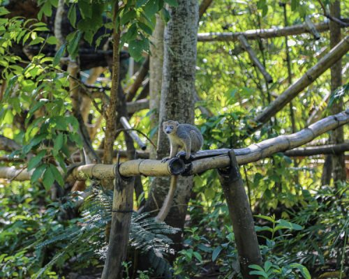 lemur sitting on tree