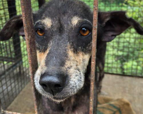 Nepal Stray Dog Rehabilitation