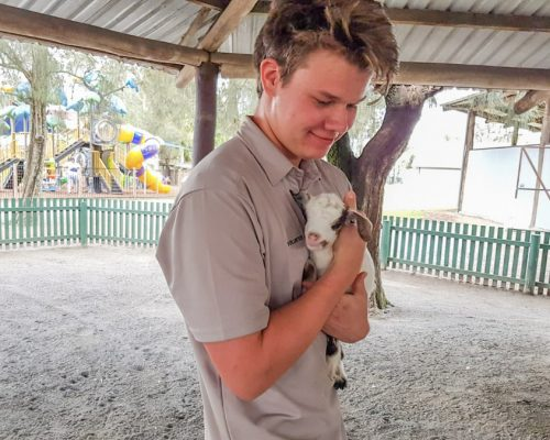 holding a baby goat