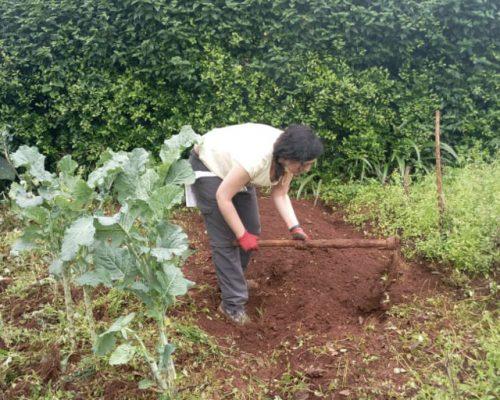 Organic farming - Bed preparation for planting - Diging (2)