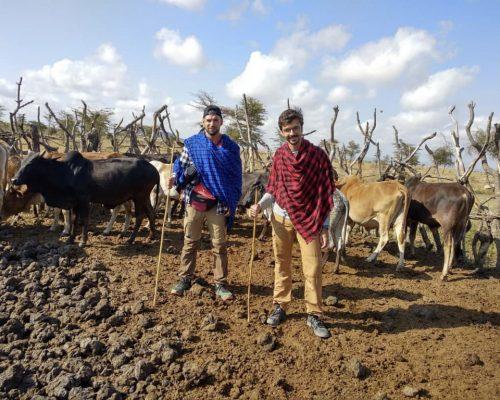Participant milking the cows in Moita Masai village