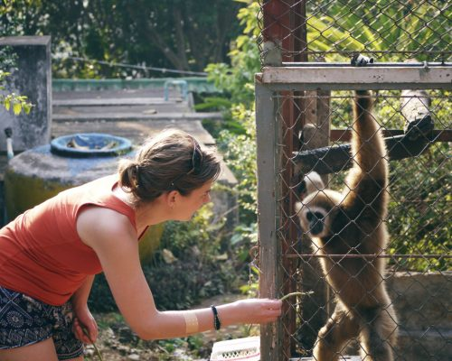 Participant with gibbon