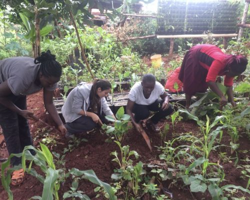 Participants working in the local farm