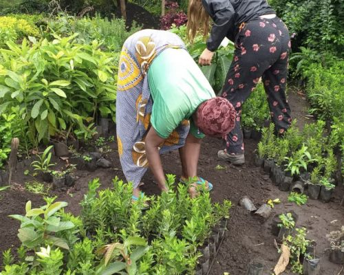 farm plantation