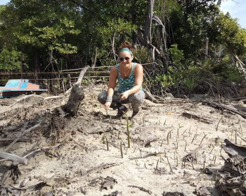 Planting new mangrove