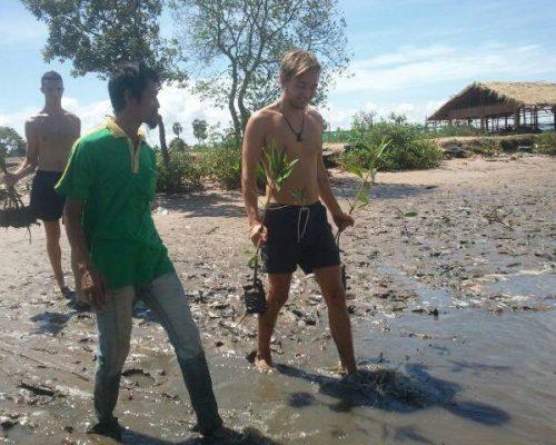 Planting new mangroves