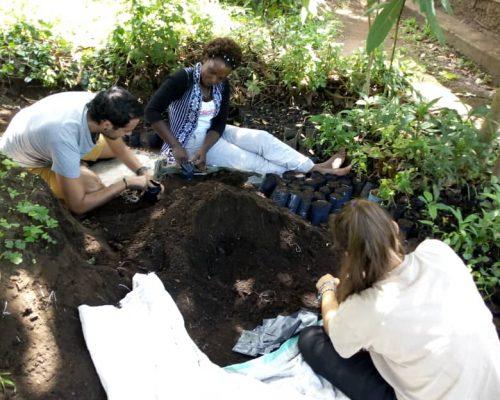 Planting trees in tree nursery