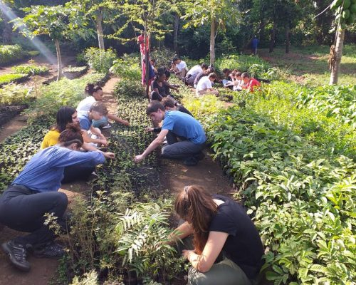 Planting trees on conservation project