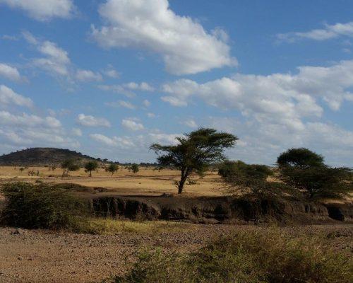 Savannah in Tanzania