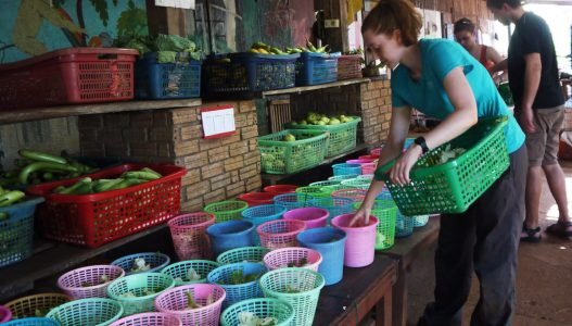 Sorting out the food mae sot placement
