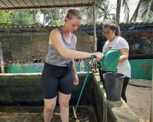 Sri Lanka Turtle project cleaning tanks