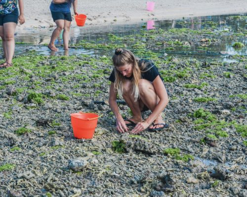 collecting crabs
