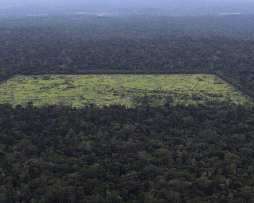amazon jungle clear cutting