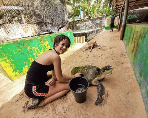 cleaning turtles in Sri Lanka