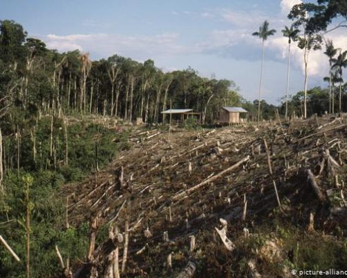 clear cutting deforestation amazon jungle issues