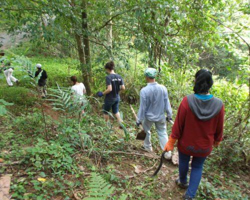 jungle walk conservation