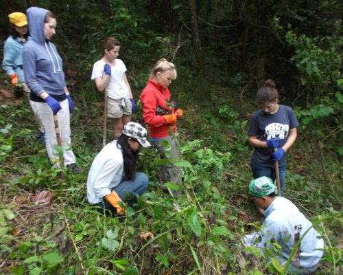 jungle conservation program planting trees volunteers