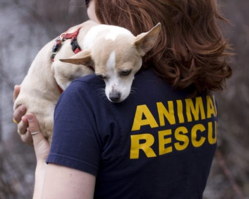 dogs rescue nepal