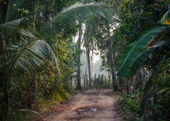 dusty path through the rainforest