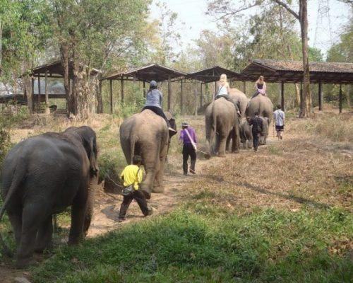 elephant_adventure5