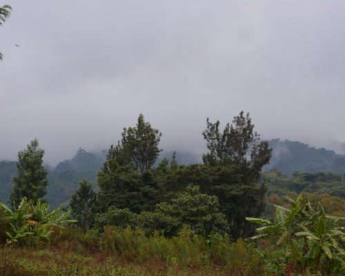green forest in Tanzania