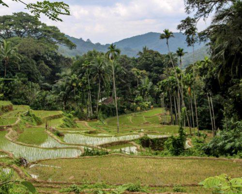 fields in Sri Lanka