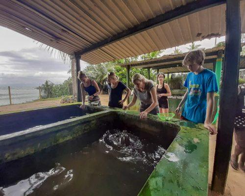 group of IVI volunteers at turtle tank