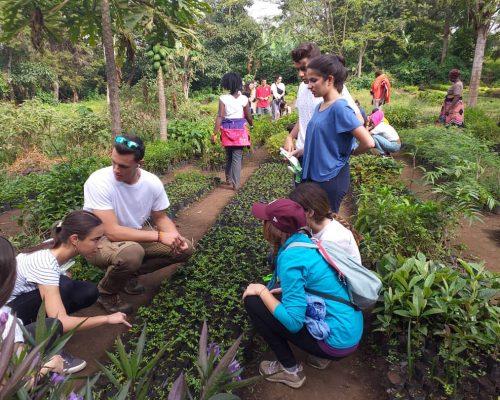 group of volunteers planting trees