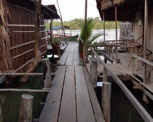 mangrove conservation cambodi