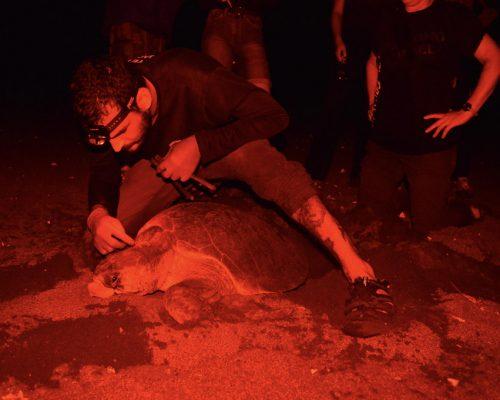 night time turtle checks