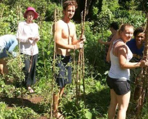 organic farming4