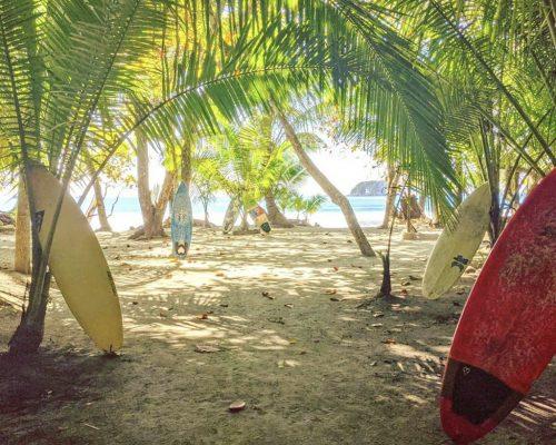 palm trees on sandy beach