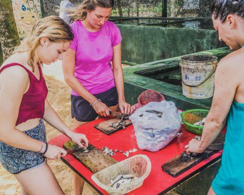 preparing food for turtles