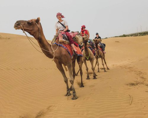 riding camels in India
