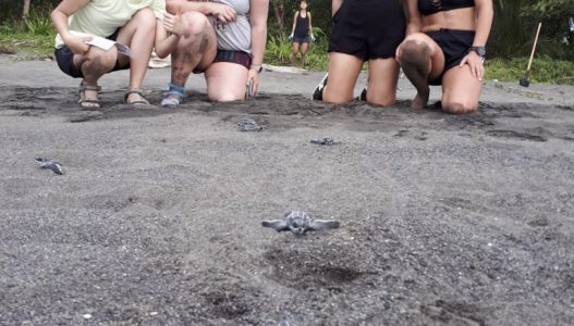setting a turtle back to ocean