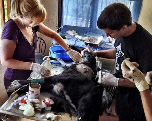treating injured dog