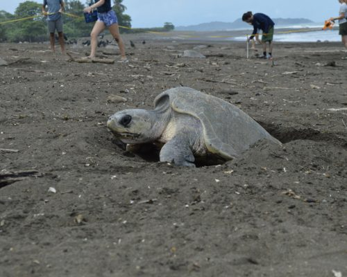 turtle popping head out of sand