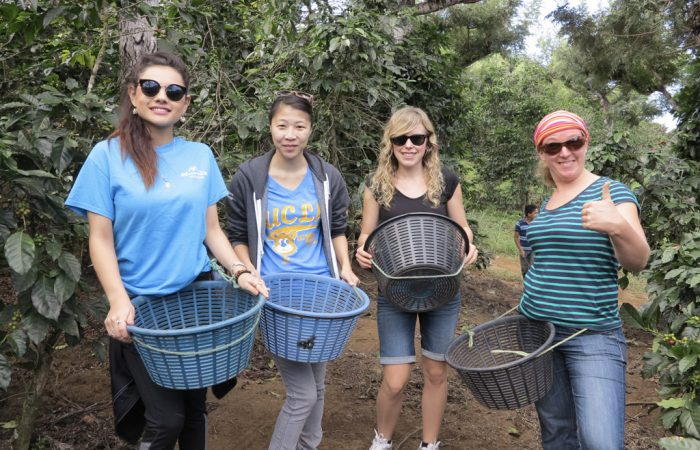 volunteers on coffee farm