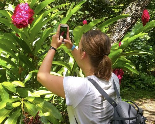 taking photo of colourful flower