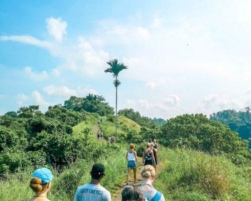walking through rice paddies-2
