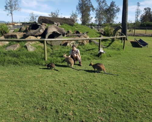 wallabie feeding
