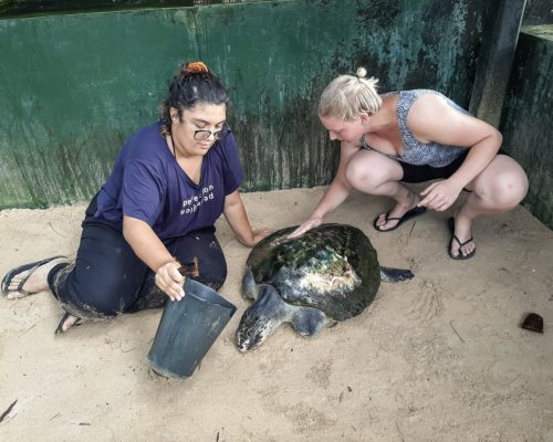 washing the turtles with IVI volunteers